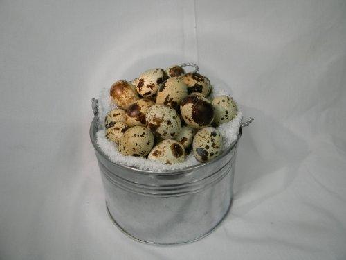 New York State, Natural, Grade A, 4 Trays of 18 Coturnix Quail Eggs (72 Eggs) (Grade Eggs)