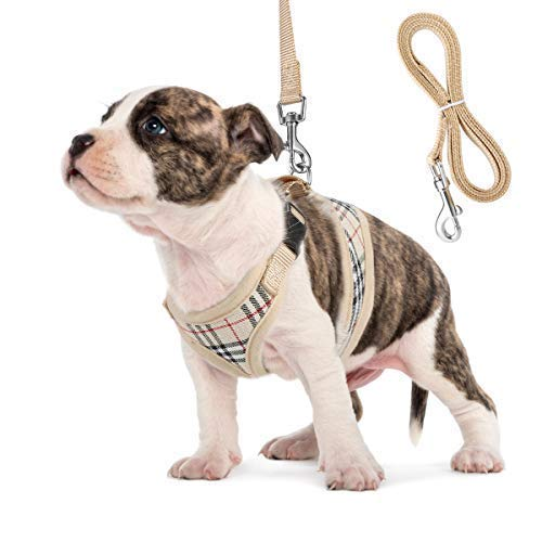 Small Dog Harness and Leash Set, Adjust Mesh Dog Harness for Small Dogs/Chihuahua, Lightweight Mesh Cat Harness,Padded Mesh Material for Breathability and Secure Fit (XS)