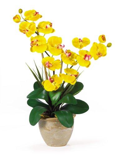 Potted Double Stem - Double Stem Phalaenopsis Silk Orchid Arrangement