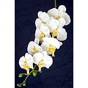"Wayhome Fair White Phalaenopsis Hanging Orchids 40"" - Excellent Home Decor - Indoor & Outdoor 30"