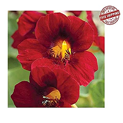 Seeds Flowers Nasturtium Tropaeolum majus lobbianum Red Emperor Curly Ukraine 1.5 Gram : Garden & Outdoor