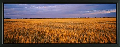 - Easy Art Prints Panoramic Images's 'Wheat Crop in a Field, North Dakota, USA' Premium Framed Canvas Art - 24