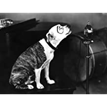 The Little Rascals Poster Art Photo Petey Pete The Pup Our Gang Hollywood Posters Photos 11x14