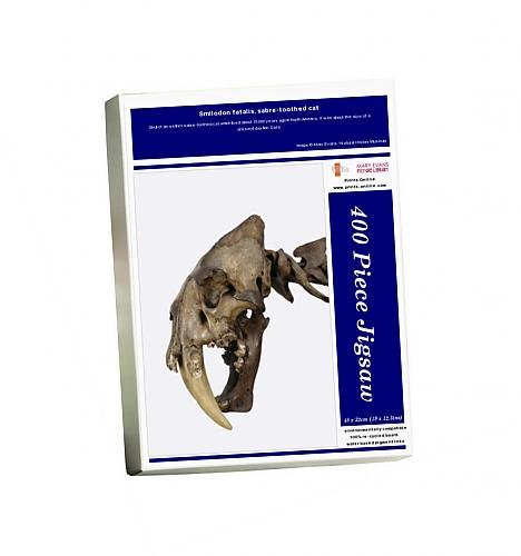 Photo Jigsaw Puzzle of Smilodon fatalis, sabre-toothed cat
