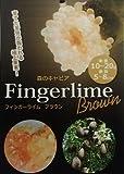 フィンガーライム ブラウン :果樹苗