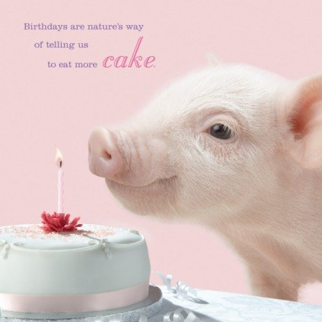In The Pink Pig Birthday Card Cake Amazon Kitchen Home