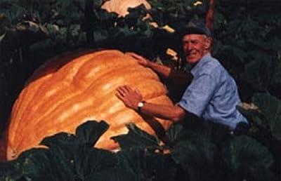 Pumpkin - Dills Atlantic Giant Vegetable Seeds
