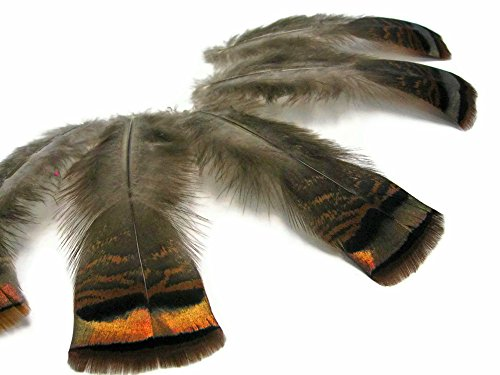 (Moonlight Feather | 5 Pieces - Natural Wild Bronze Turkey Flats Feathers, Fly Tying, Smudging Feathers)