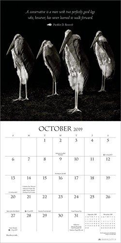 Bird Brains 2019 Wall Calendar: Truths from Literary Humorists and Avian  Portrait Photography