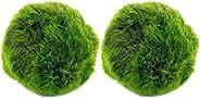 VILLCASE 2 Pcs Bola de Musgo Marimo Mini Purificação de Ãgua Algas Decortiva Planta Aquática Bola de Marimo Pl