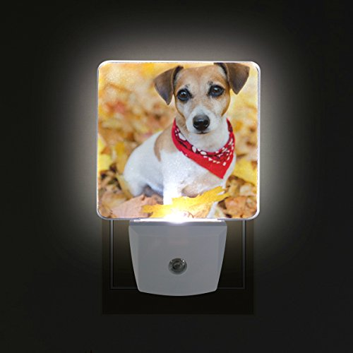 GIOVANIOR Jack Russell Terrier Puppy Dog Pattern Plug for sale  Delivered anywhere in Canada