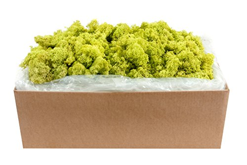 SuperMoss (21497) Reindeer Moss Preserved, Chartreuse, 10lbs by Super Moss
