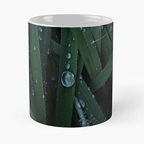 Blue Green Grass Center Drop Close Up Dew - 11 Oz Coffee Mugs Unique Ceramic Novelty Cup, The Best Gift For -