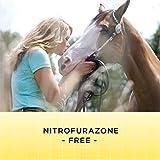 Corona Ointment for Horses | Lanolin-Based Formula