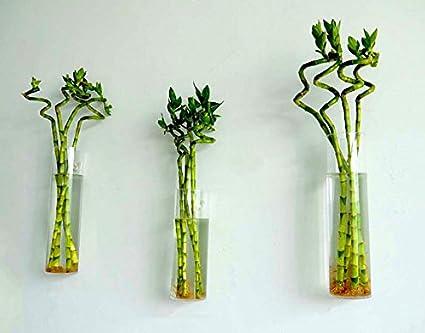 Amazon Newdreamworlds Set Of 3 Wall Glass Vasecylindrical