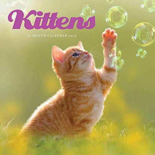 2019 Kittens Mini Wall Calendar, by Carousel Calendars