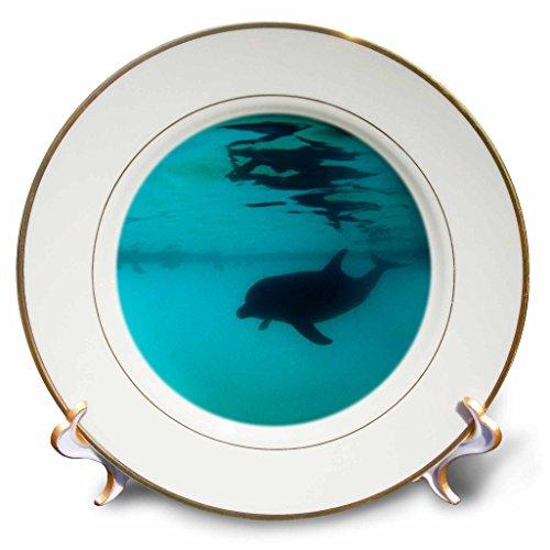 3dRose cp_10702_1 Bottlenose Dolphin-Porcelain Plate, 8-Inch