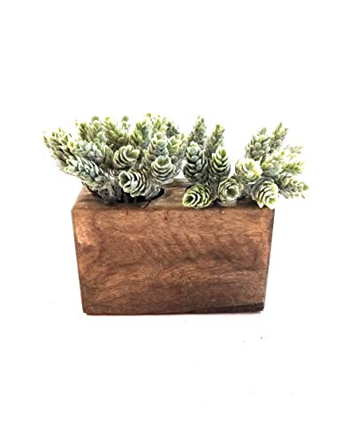 Rustic Farmhouse 2 Hole Wooden Candle Holder- Sugar Mold Candle Holder-Succulent ()