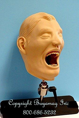 Ortodoncia maniquí simulador de entrenamiento modelo: Amazon.es ...