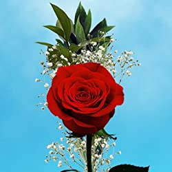 25 Valentine's Day Single Red Rose Bouquet with Fillers | Single Wrapped Roses | Flowers for Delivery