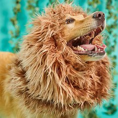 Pet Krewe Lion Mane for Dog -Lion Mane Dog Costume by
