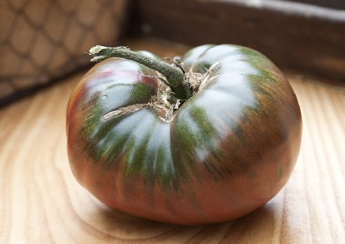 paul-robeson-heirloom-tomato-premium-seed-packet