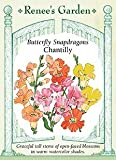 Snapdragons - Chantilly Seeds