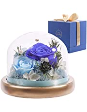Komfort Home Preserved Roses Fresh for 2 Years | Real Eternal Roses Floral Arrangement | Birthday Gift Anniversary Get Well Flowers