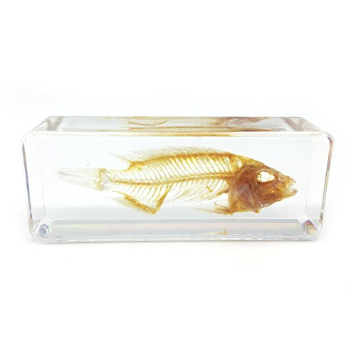 Fish Skeleton Paperweight Specimen for Science Education