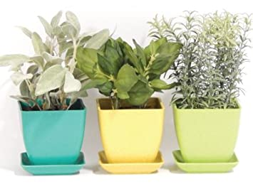Amazon.com : Indoor Herb Garden Kit : Garden & Outdoor