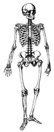 Large skeleton rubber stamp WM P19 (Skeleton Rubber)