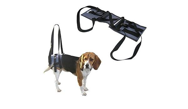 Soporte veterinario Handy Canis – Arnés para perros con graves ...