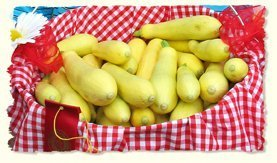 David's Garden Seeds Squash Summer Midas II DGS398RG (Yellow) 25 Hybrid Seeds
