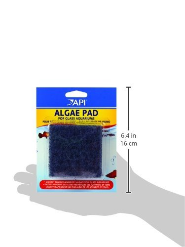 [해외]손 개최 조류 패드/Hand Held Algae Pad