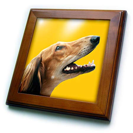 3dRose Sven Herkenrath Dog - Portrait of Greyhound with Yellow Background - 8x8 Framed Tile (ft_310586_1)