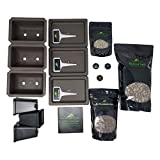 Traditional Bonsai Seed Growing Kit - Japanese
