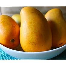 Ataulfo Mango - Mexican Mangoes