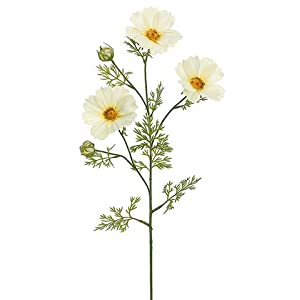 """30"""" Cosmos Spray Soft Yellow (pack of 12) 34"""