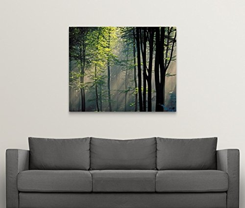 greatBIGcanvas Gallery-Wrapped Canvas entitled Sunlight and fog in forest by Great BIG Canvas 48''x38'' by greatBIGcanvas