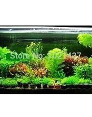 Promozione 1500 semi 15 tipi di semi di pesci d'acquario semi di erba serbatoio di acqua Pianta acquatica fai da te