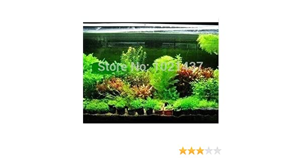 Promoción 1500 semillas de 15 tipos de semillas de peces de acuario tanque de agua semillas de la hierba Planta acuática de bricolaje: Amazon.es: Jardín