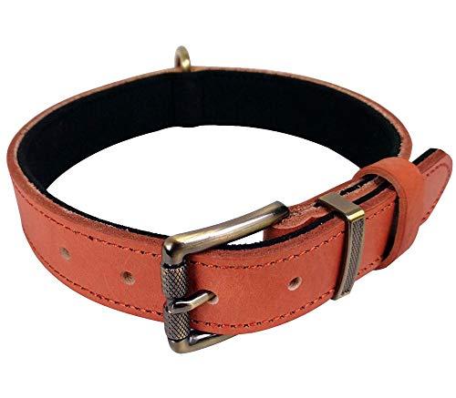 (Tellpet Italy Full-Grain Leather Padded Dog Collar, Orange, Large)