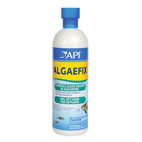 Control Tetra Algae (API ALGAEFIX Algae Control Solution 16-Ounce Bottle)