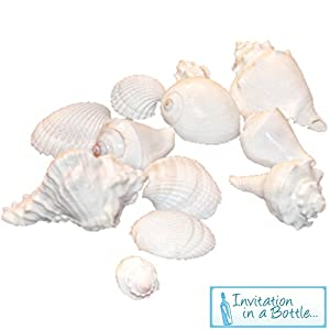 white seashells