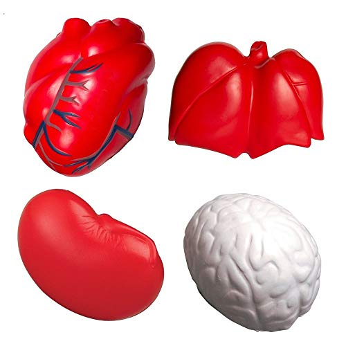 (GL Toys Anatomy Stress Toy Set of 4 (Heart Veins, Kidney, Lungs)