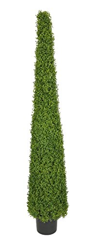 House of Silk Flowers Artificial 6-Foot Lt Green Boxwood Pyramid Topiary