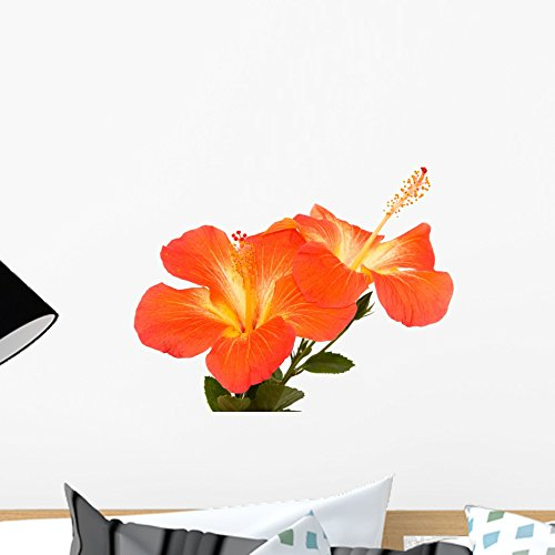 Orange Hibiscus Isoleted Wall Mural by Wallmonkeys Peel and Stick Graphic (18 in W x 14 in H) WM41184
