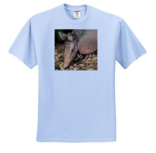 (3dRose Danita Delimont - Armadillo - USA, Louisiana, Lake Martin. Nine-Banded Armadillo Portrait - T-Shirts - Light Blue Infant Lap-Shoulder Tee (12M) (TS_259369_76))
