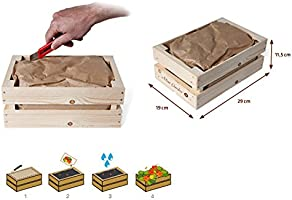 Kit de Cultivo Caja de madera - MiniGarden Girasol: Amazon.es: Jardín