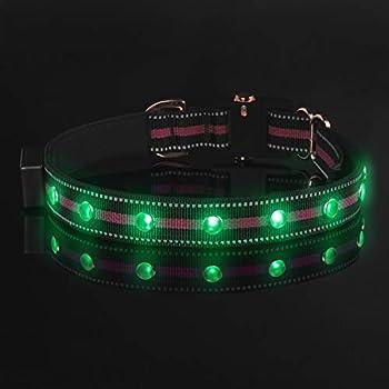 Amazon.com: pawow LED perro collar, Mantenga su perro ...